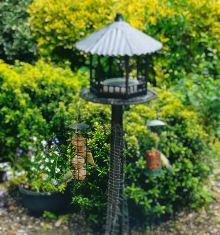 Mobile Photography Bird Feeder Editing Photos Through The Window Summer Time