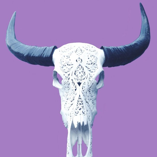 Pastel Power Buffalo Buffalo Skull Skull Skulls Soft Tones Softtones Mono Background Pastel Pastel Colors Lilac Purple Decorative Decorations Decoration Cowskull Cow Skull Art ArtWork Minimal Minimalism The OO Mission