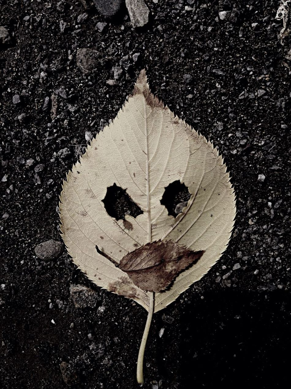 Leaves Face