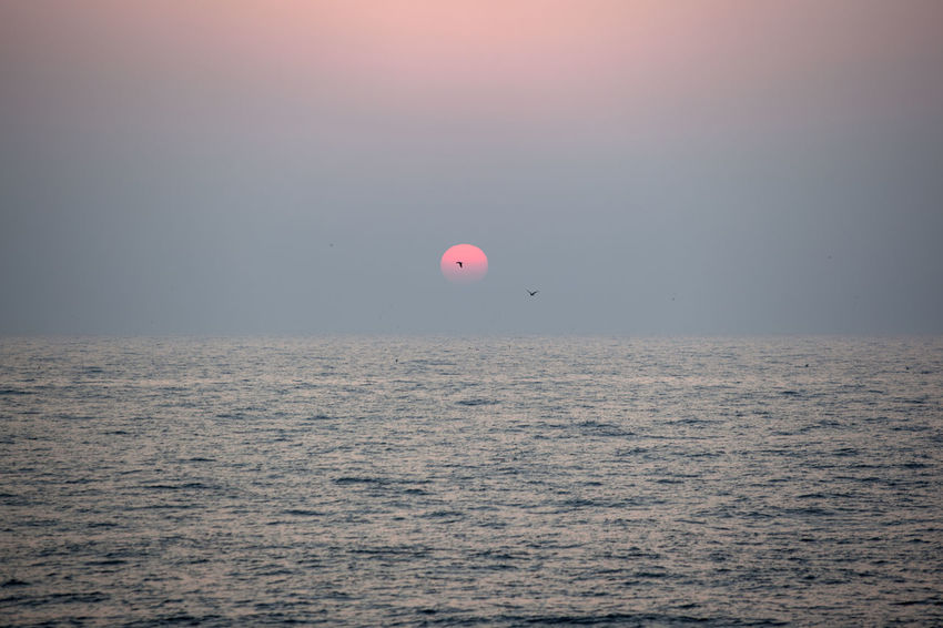 Sunset at Gyeokpo Port in Byeonsan, Jeonbuk, South Korea Beauty In Nature Day Horizon Horizon Over Water Nature No People Outdoors Scenics Sea Seagull Sky Sunset Tranquil Scene Tranquility Water