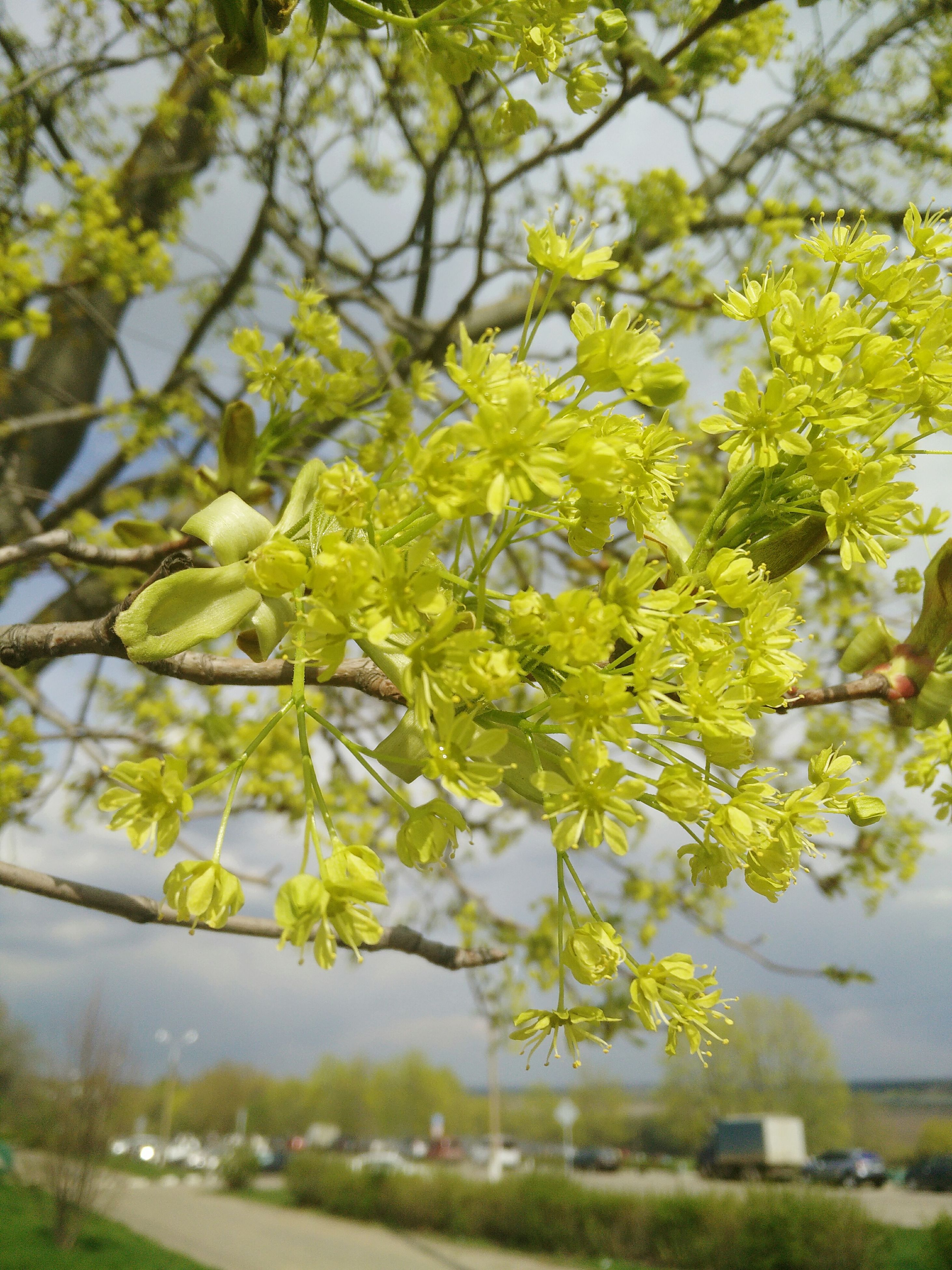 tree, flower, growth, branch, freshness, nature, fragility, beauty in nature, green color, plant, focus on foreground, day, leaf, blossom, sky, outdoors, park - man made space, close-up, blooming, no people
