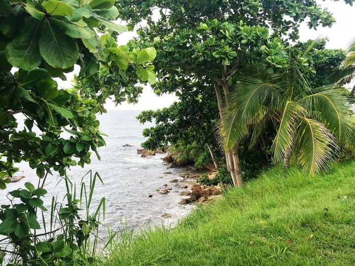 Nature Nature_collection Nature Photography Green Plant Water Beauty In Nature Beach Like Like4like Likeforlike Likes