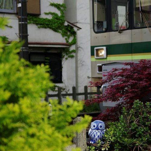 Hidden Gems  Owl Owl Art Ceramics Ceramicart Ceramic Ceramic Art Craft Porcelain  Hide And Seek Train Japan Japan Art Yakimono Japan Garden