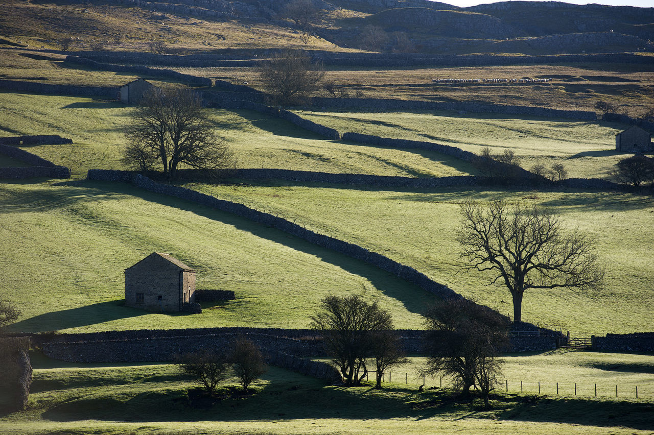 Yorkshire Dales Architecture Barn Beauty In Nature Countryside Dales Day Environment Farm Farming Farmland Gods Country Landscape Moorland Moors Nature No People Outdoors Scenics Shadow Sheep Sunlight Trees Walls Yorkshire Yorkshire Dales