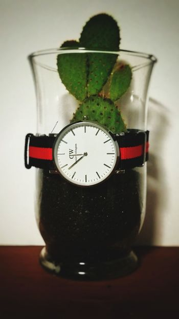 Mix Yourself A Good Time Gauge Time No People Clock Indoors  Minute Hand Clock Face Close-up Day Indoors  Time To Reflect Fashion Colorful Nature Plant Cactus Green Color Indoors  The Week On EyeEm