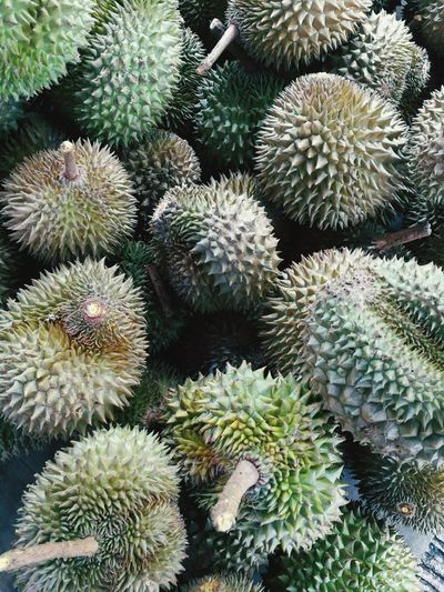 Thorn Growth Cactus Spiked Plant Full Frame Nature No People Backgrounds Close-up Outdoors Organic Abstract Beauty In Nature Nature Local Fruit Durian King Fruit Thick Skin Malaysian Fruit Malaysian Favourite Fruit Golden Fruit Local Food Culture Local Food
