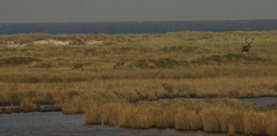 Deer Family Animal Themes Animals In The Wild Beauty In Nature Calm Coastline Darßer Ort Deer Herd Nature No People Non-urban Scene Ocean Outdoors Plain Scenics Sea Seascape Solitude Tourism Tranquil Scene Tranquility Travel Destinations Water Waterfront Zoology