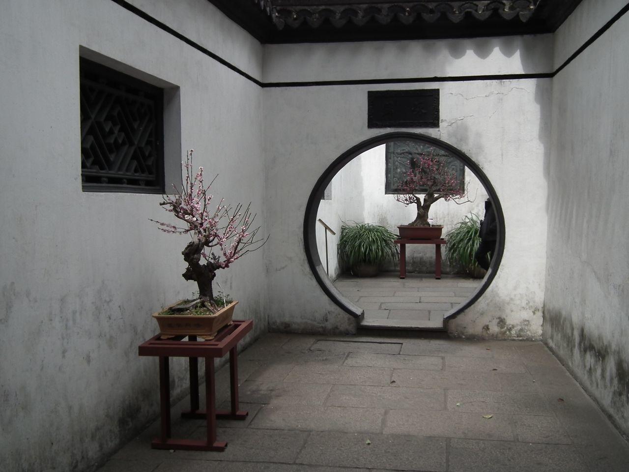 Beautiful stock photos of shanghai, Bonsai Tree, Chinese Culture, Chinese Garden, Day