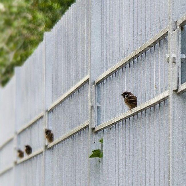 Nature Birds Daylight Damansara