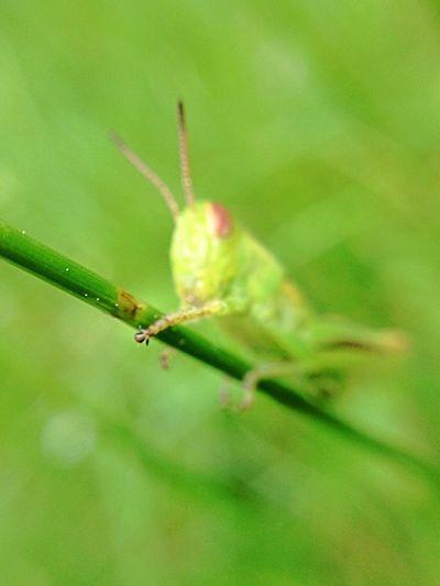 Macro Photography Olloclip Macro Hello World Very Green