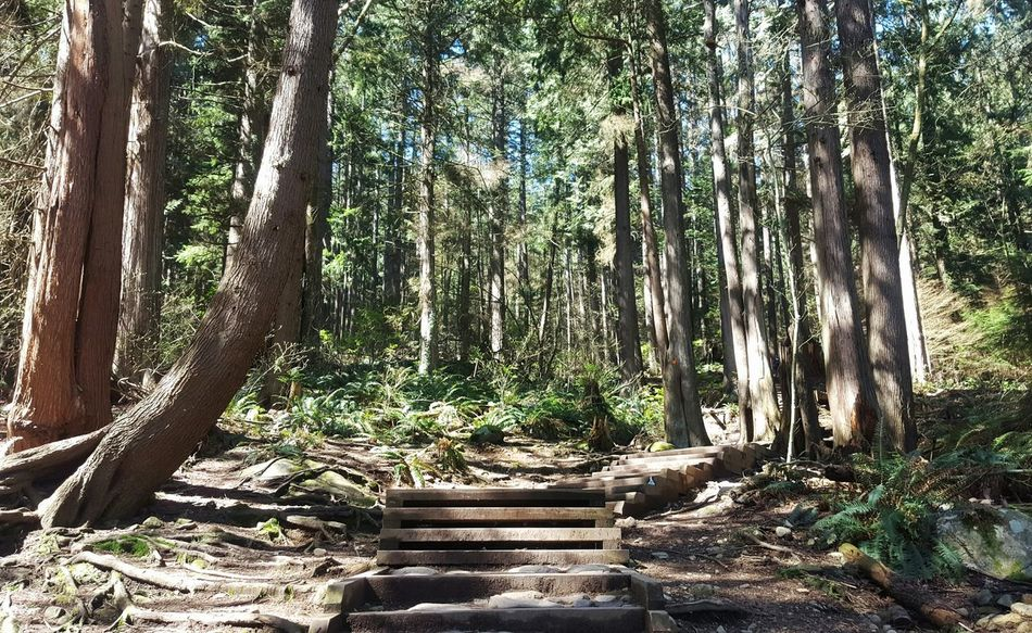 Tree Tree Trunk Forest Nature Growth Outdoors Day No People WoodLand Beauty In Nature Tree Area Sky Scenics Peaceful Tranqulity Travel Destinations BadenPowell North Vancouver Hiking Hiking Trail Path Beginning Spring Sunshine Light Through The Trees The Secret Spaces