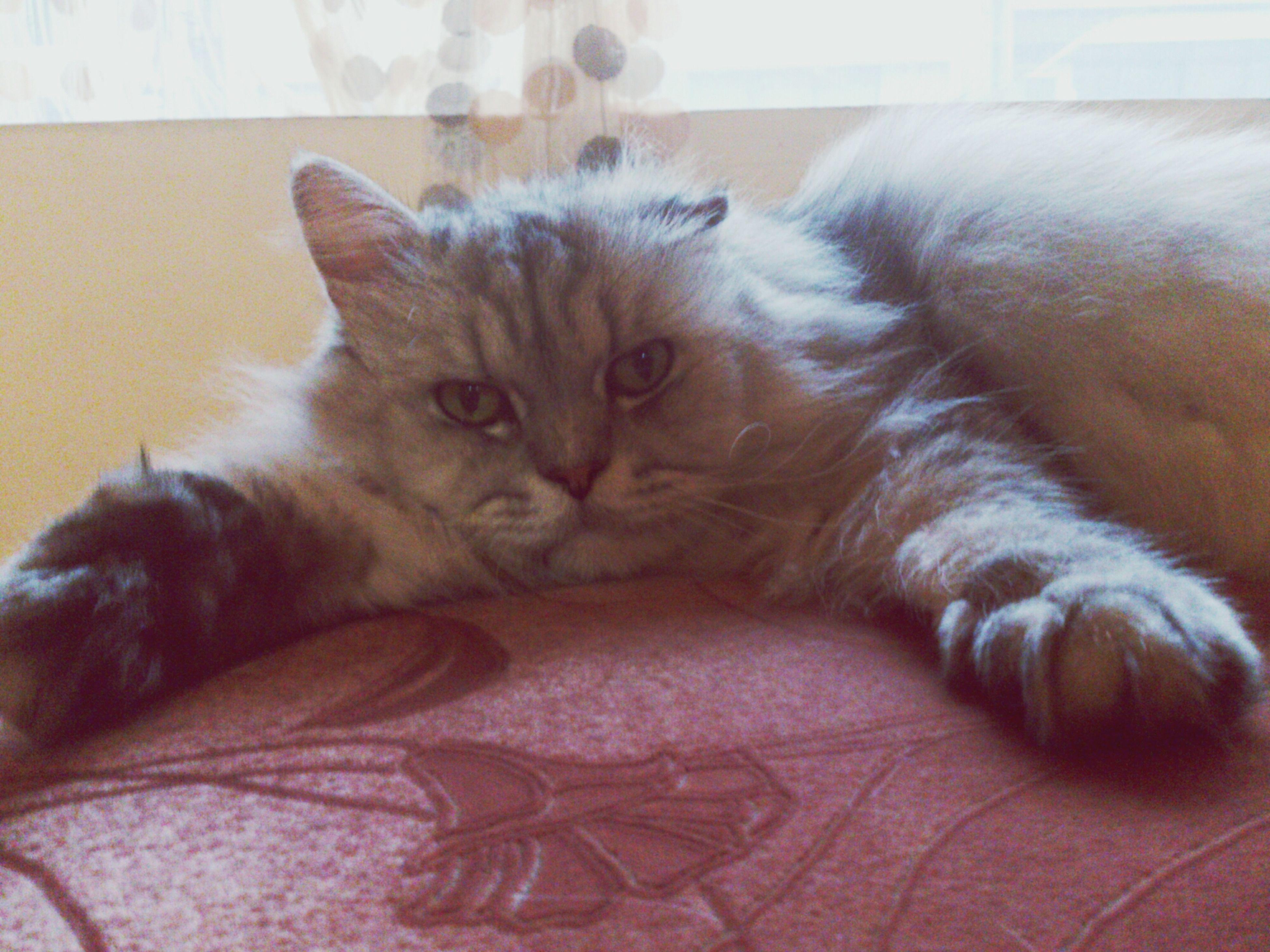 喵~(趴 Cat Clara Filter