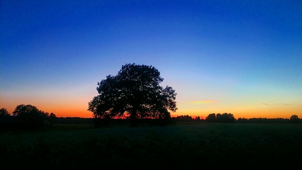 Eveningsky Quiet Moments Country Life Countryside Evening View Naturegifts 🌈 Latvia Nature Joyful Nice Atmosphere Enjoying Life Taking Photos June Nature Fieldscape Tree Tree And Sky Sunset Sunset_collection The Great Outdoors - 2016 EyeEm Awards The Essence Of Summer- 2016 EyeEm Awards