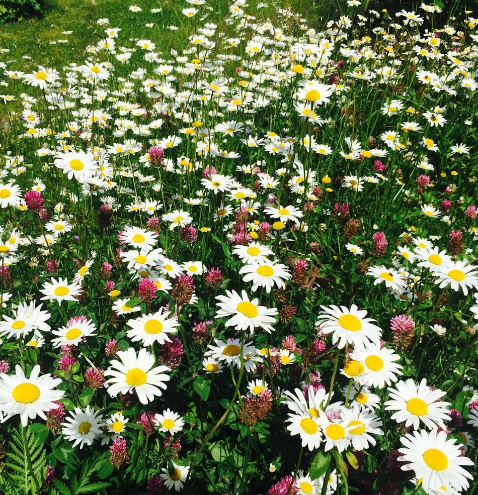 Flowers, Nature And Beauty Vacations Enjoying Life