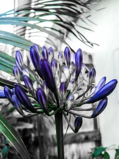 Agapanthus Agapanthus Africanus Garden Flowers Gardening Garden Nature Photography Plant Photography Plants And Flowers Flowers Flower Blossoming Fresh & Bright Flowers, Nature And Beauty Flower Photography Flowers In Bloom Flowers,Plants & Garden Blossom Flower Blossoms  Flowers 🌸🌸🌸 Flowers :) Blossom Flowers Blossom Backyardphotography Garden Photography Photo