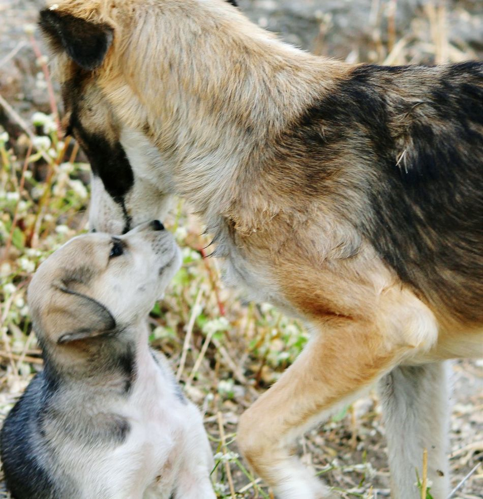 Beautiful stock photos of wolf, Animal Family, Animal Themes, Close-Up, Day