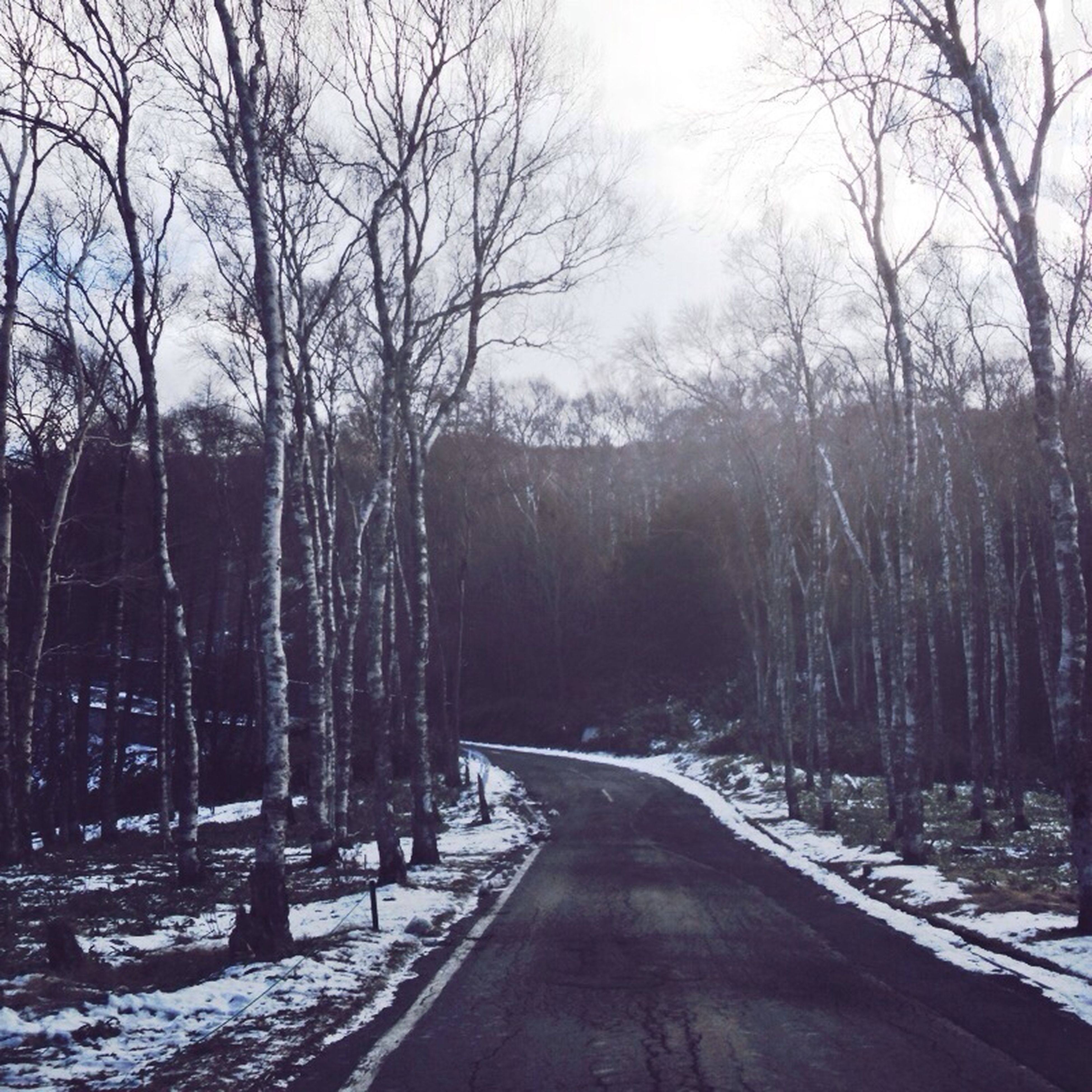 snow, winter, cold temperature, the way forward, bare tree, season, tree, weather, diminishing perspective, vanishing point, road, tranquility, covering, tranquil scene, nature, transportation, frozen, beauty in nature, scenics, branch