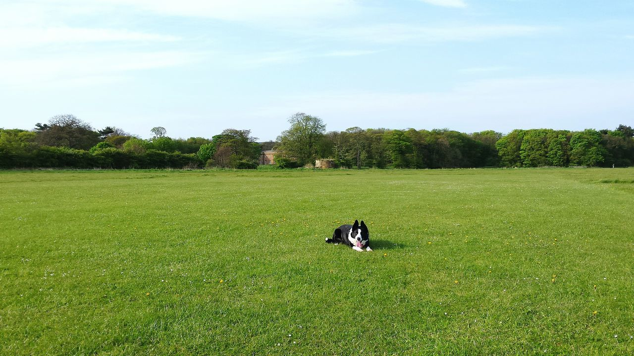 grass, tree, green color, animal themes, nature, domestic animals, field, growth, mammal, landscape, sky, day, one animal, pets, dog, tranquility, outdoors, no people, scenics, beauty in nature
