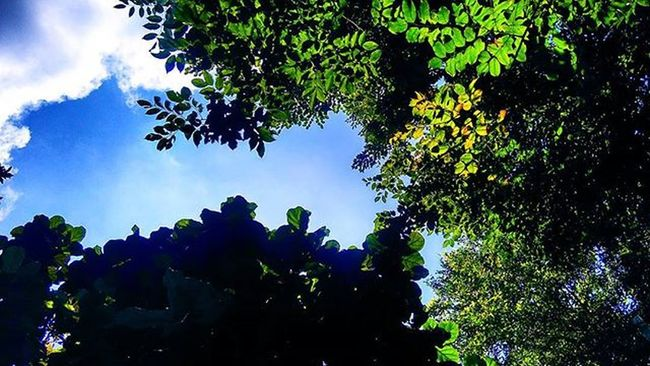 😍😍😍 Gap Way Street Sky Bluesky Green Threes Nature View Likeforlike Like4like Goodview Goodangel Good Goodtime VSCO Vscocam Vscofilter Happy Awesome Great Mobilephotography Phonegraphy Xiaomi Redmi2camera xiaomiphotography mifanssemarang giftr2