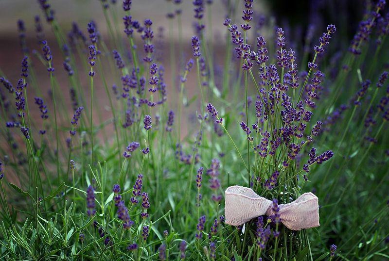 Lavender Nature Flower Plant Summer