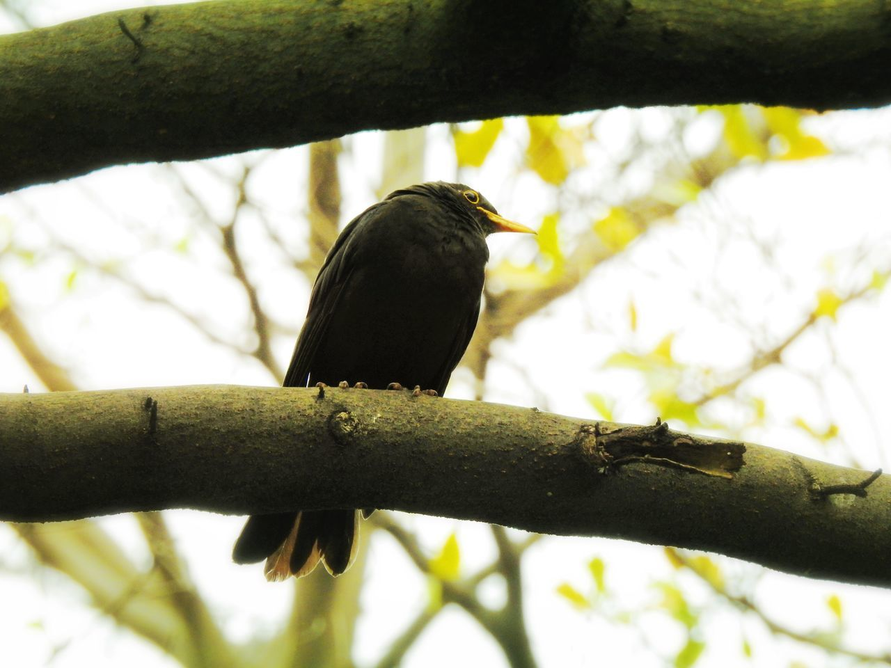 Bird Perching Animal Themes One Animal Tree Animals In The Wild Animal Wildlife Branch Low Angle View Nature No People Outdoors Day Beauty In Nature