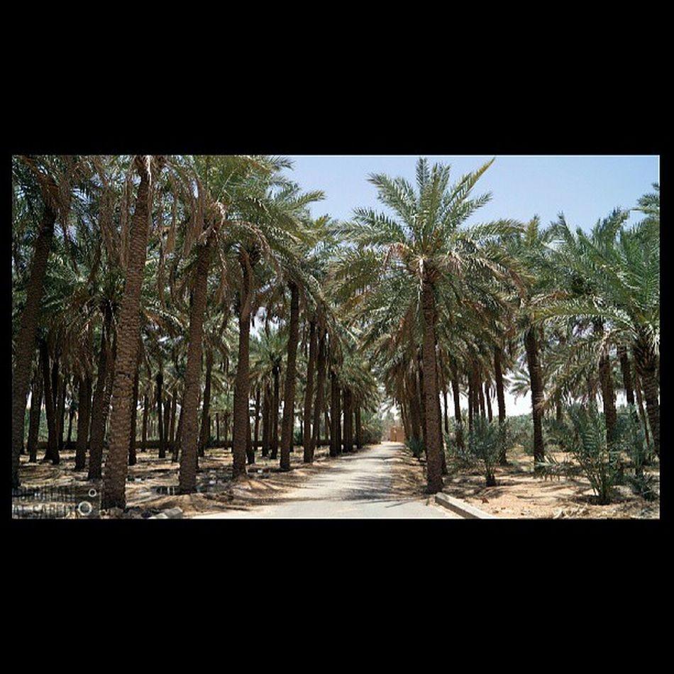 مزرعة الربيعية القصيم السعودية  ksa Saudi nature beautiful landscapes photography photo photos TagsForLikes picture photography سوني sony sonya57 green tree trees hash_stagram تصويري صورة التصوير