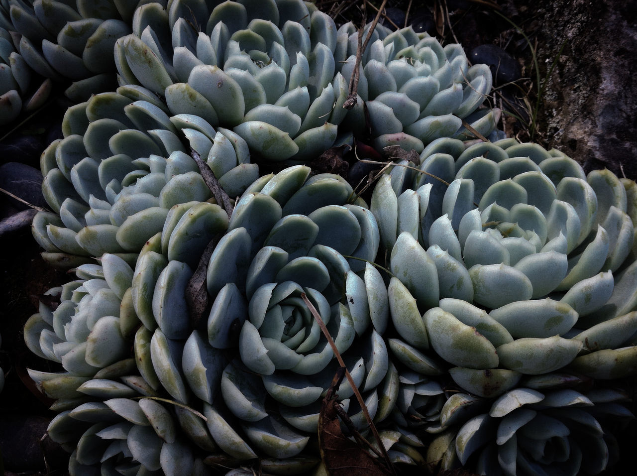 Close-Up Of Succulent Plants Growing On Field