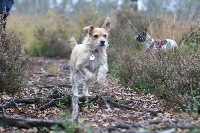 Dog Dog Portrait Dogs Draußen Hund Hund In Aktion Hunde Hunde In Aktion Hundeportrait Im Moor Laufender Hund Outdoors Portrait Running Dog Spaziergang Im Moor