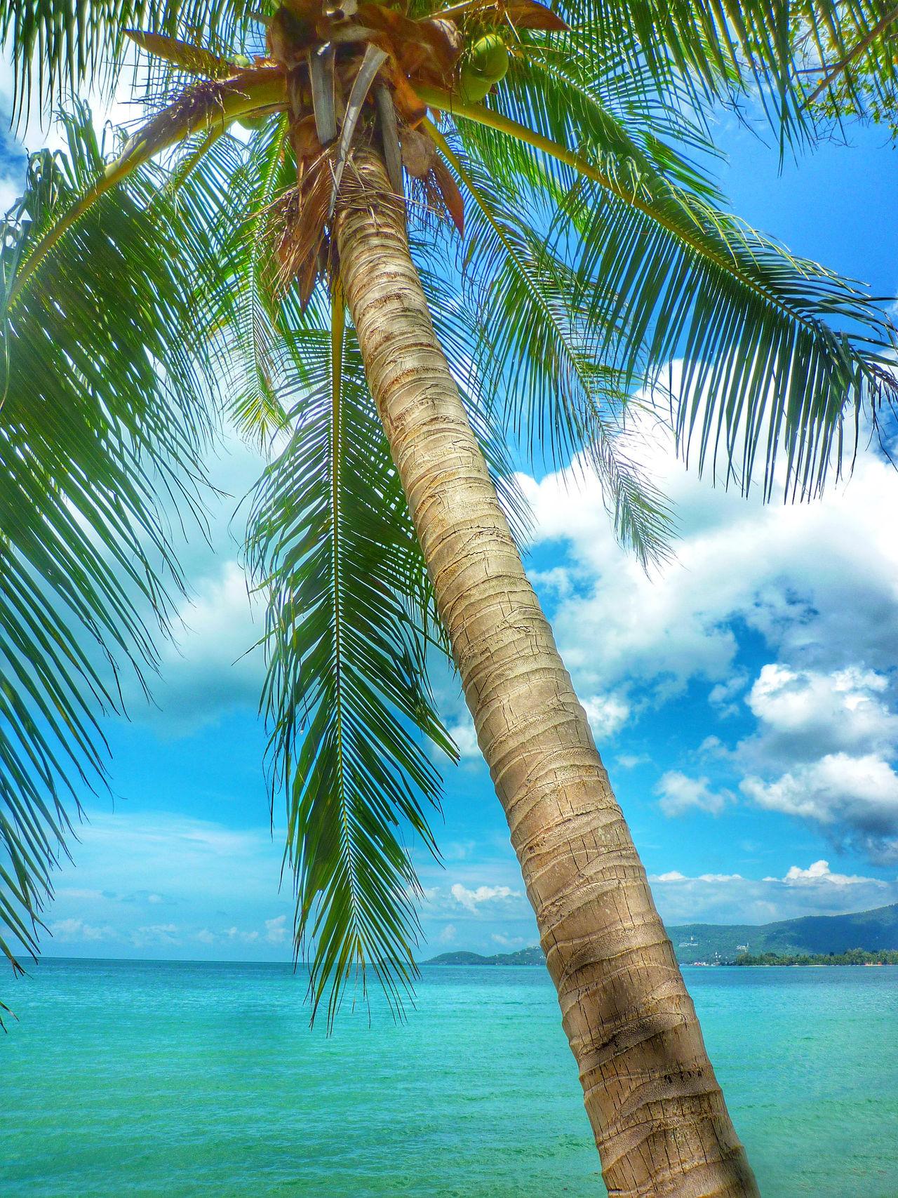 Beautiful stock photos of tropical, Beach, Beauty In Nature, Cloud, Coast