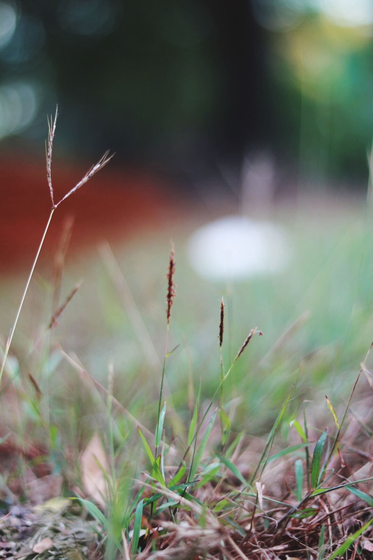Nature Close-up Grass Outdoors Flower No People