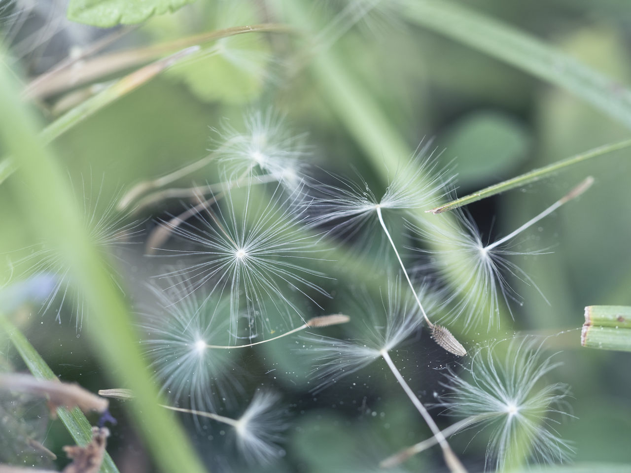 Beauty In Nature Close-up Dandelion Seeds Day EyeEm Gallery Freshness Green Color Growth Nature Nature Photography Nature_collection Naturelovers No People Outdoors Plant Seeds Seeds Flower