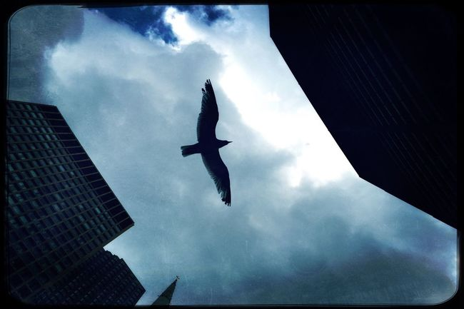 Daley Plaza, Chicago. IPhoneography Eye4photography  Shootermag_usa Hipstamatic EyeEm Best Shots Photojournalism Documentary Reportage Photooftheday Building Streetphotography Bird Seagull Sky Flight Silhouette