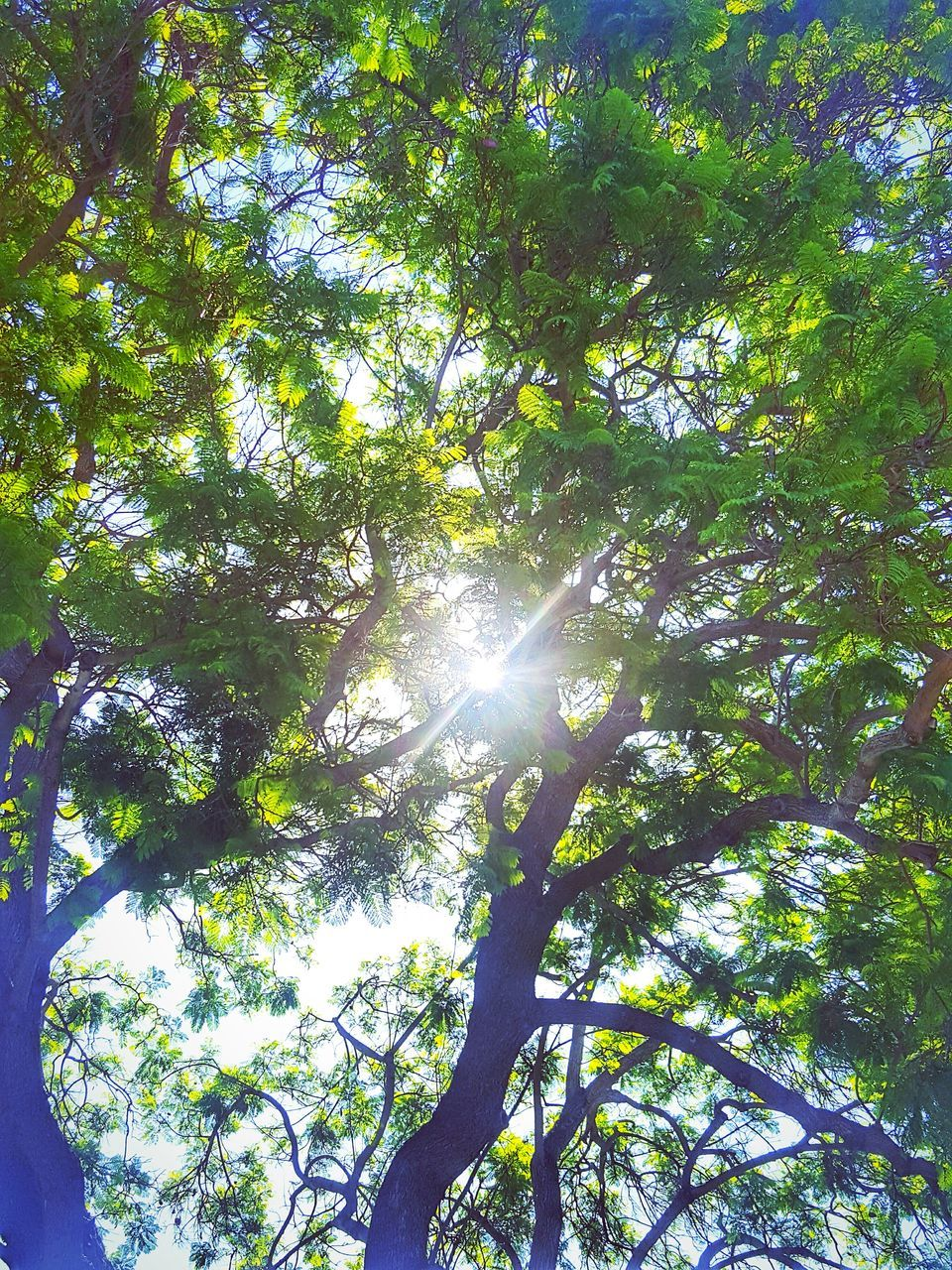tree, low angle view, nature, sunlight, sunbeam, growth, lens flare, tranquility, day, forest, sun, no people, outdoors, tranquil scene, beauty in nature, branch, scenics, sky
