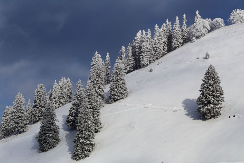 Rime on mountain firs. Betterlandscapes Cold Temperature Coniferous Tree Copy Space Diagonal EyeEm Masterclass Winter Sport Peace EyeEm Nature Lover Firs Forest Frost Heile Welt Landscape Minimalism Mountain Miles Away No People Pristine Rime Zürcher Oberland Scenics Snow Tranquility Winter