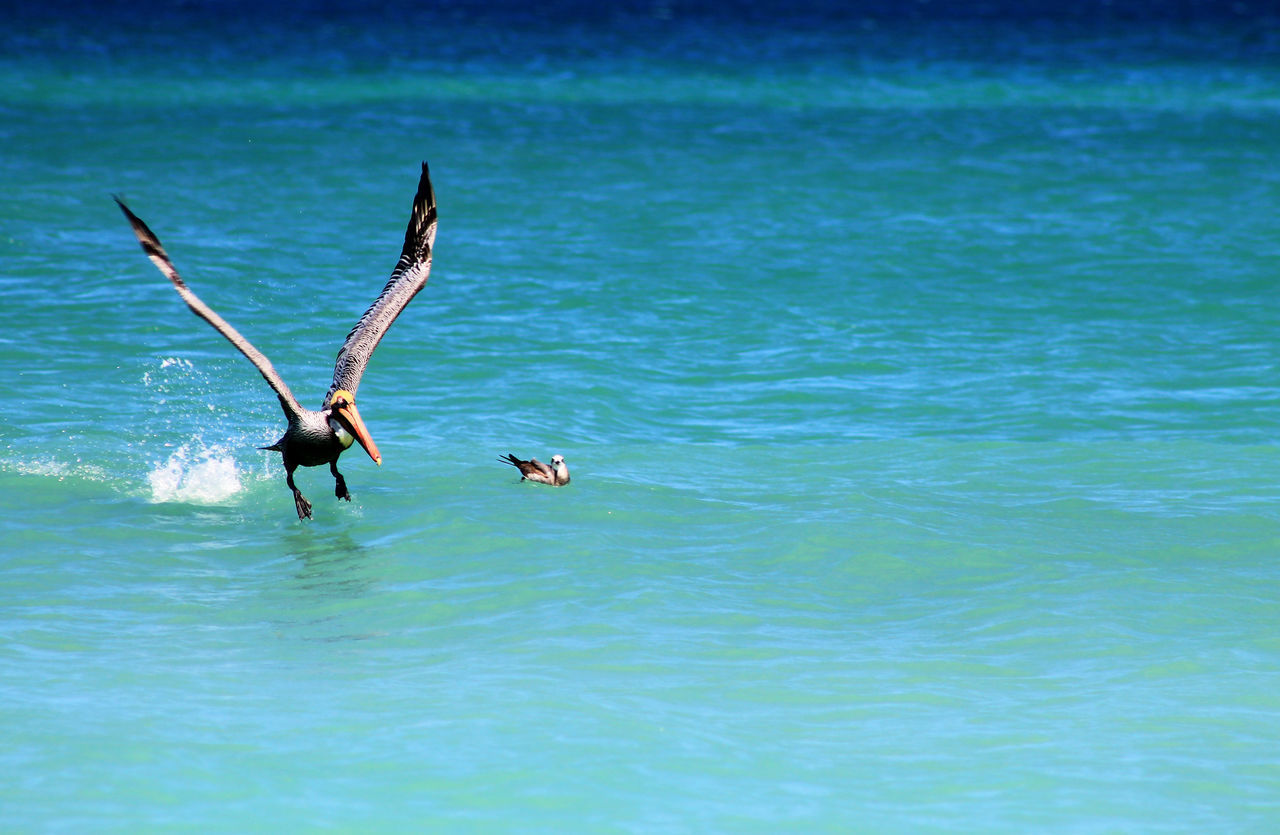 nature, water, waterfront, animal themes, sea, animals in the wild, outdoors, day, beauty in nature, swimming, real people, flying, spread wings, bird