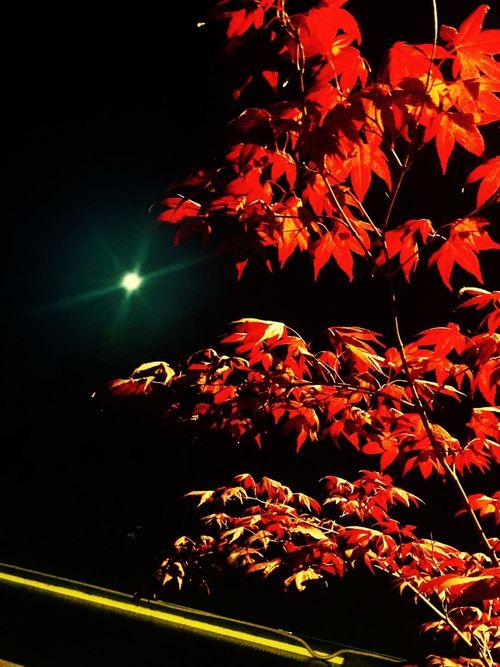 Lune Soirées été Arbuste