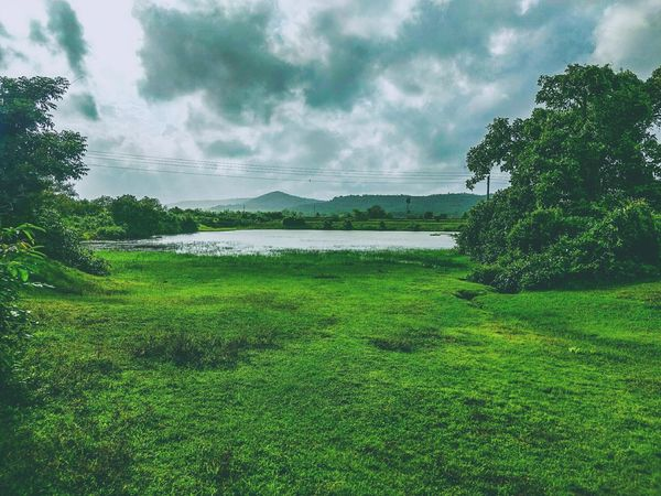 Tree Green Color Growth Nature Sky Cloud - Sky No People Landscape Outdoors Beauty In Nature Grass Lush - Description Natural Disaster Day Lake Lake View Landscape_photography Lakeview Lakeside Lakescape Greenery Green Nature Green Grass Beauty In Nature Beautiful Nature