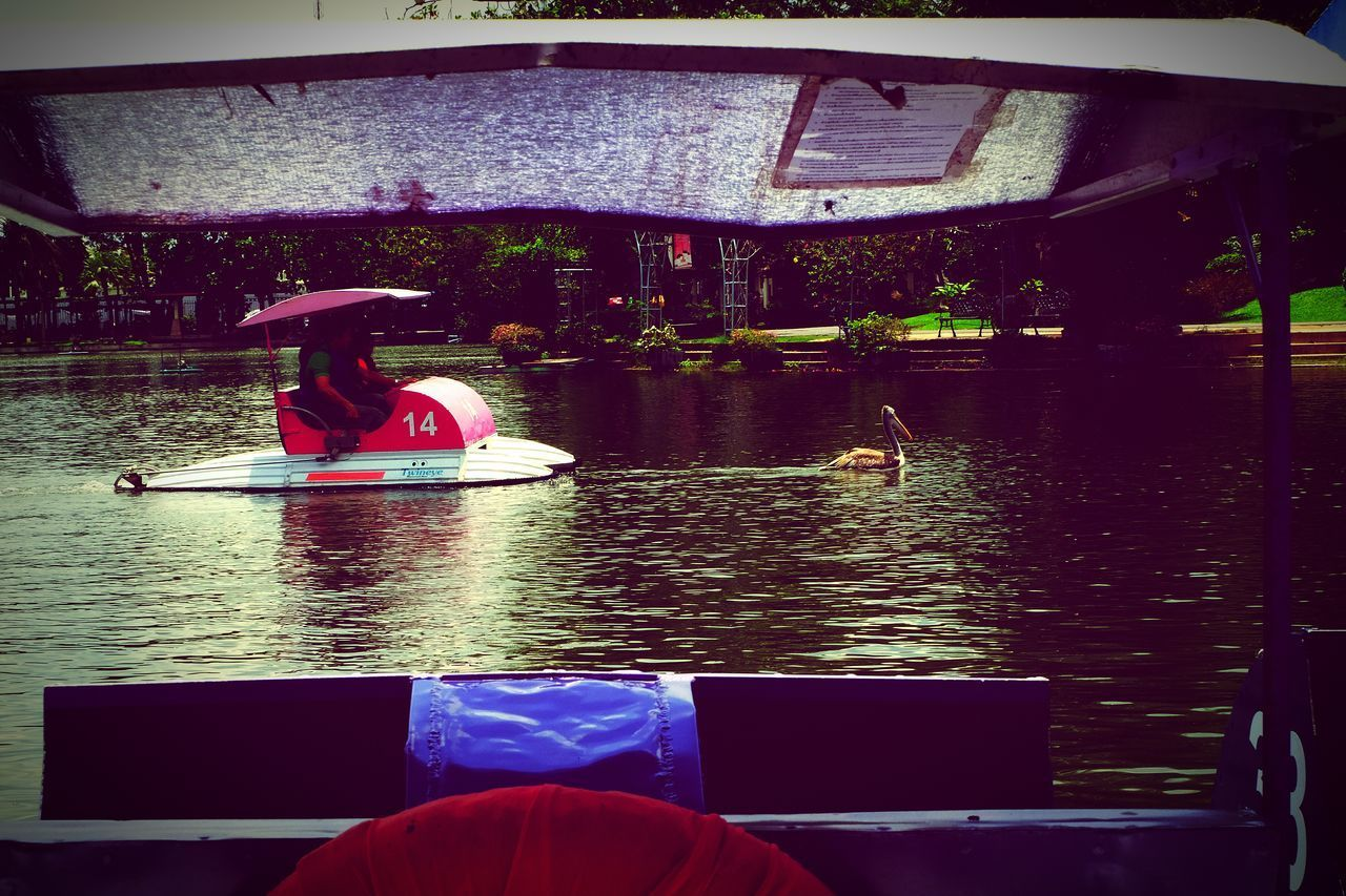 Nautical Vessel Water River Outdoors One Person River View Close-up Zoo Animals  ZooLife Funny Moments