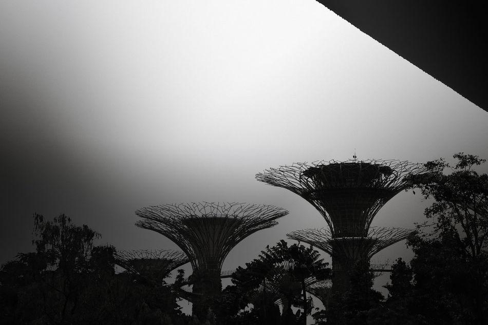 Black And White Day EyeEm EyeEm Best Edits EyeEm Best Shots EyeEm Gallery Fine Art Photography Low Angle View Nature No People Outdoors Singapore Sky Tree
