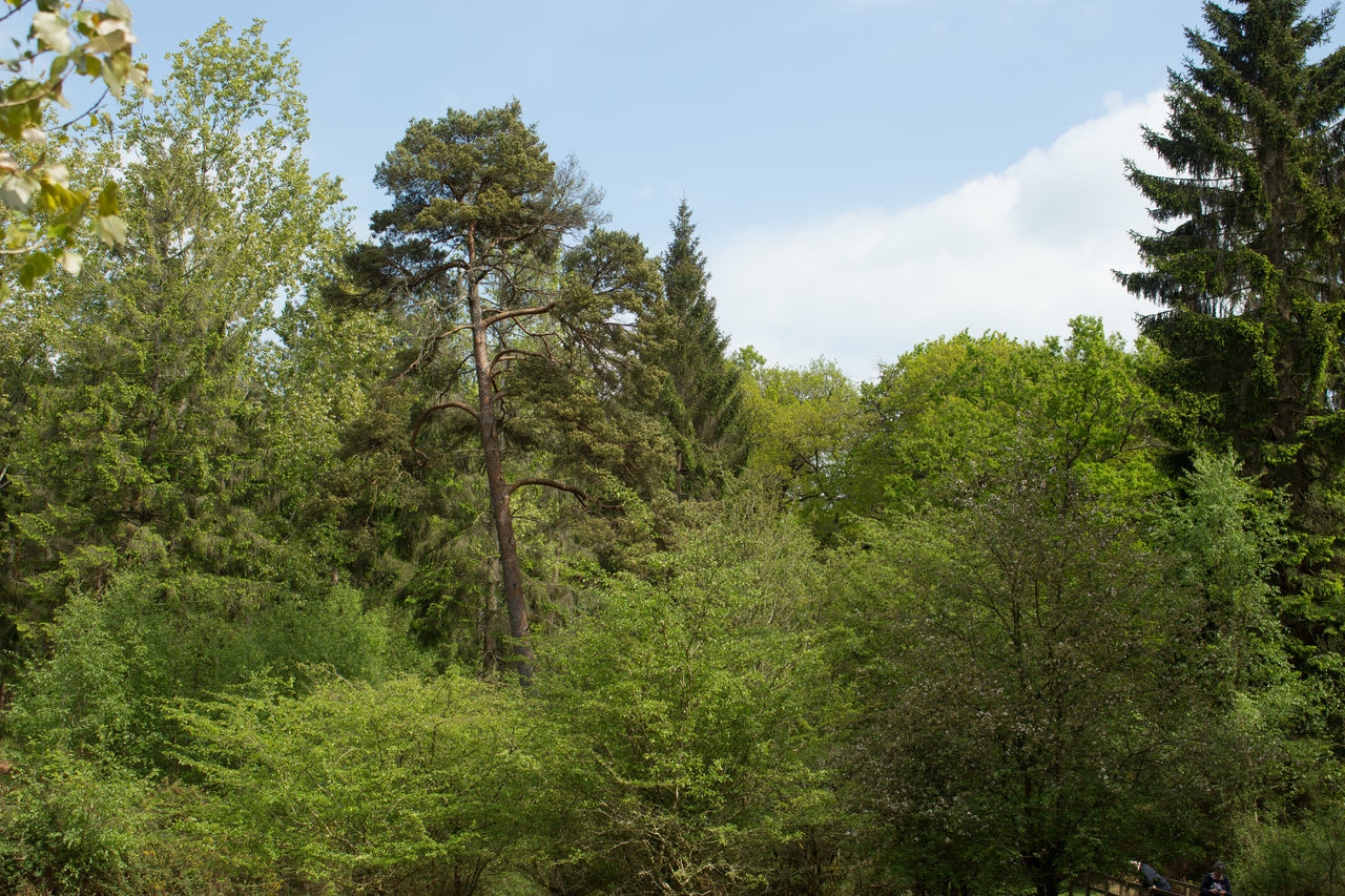 tree, nature, growth, forest, no people, outdoors, day, beauty in nature, sky