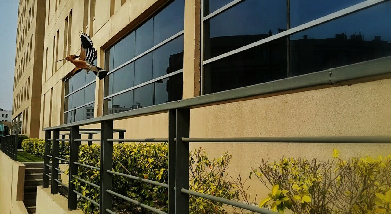 Spotted this bird in my office area. Office Building Office Building Exterior Week On Eyeem Office Block Birds_collection Bird EyeEm Nature Lover Eyem Gallery EyeEm Samsung Galaxy S4 Greaternoida India