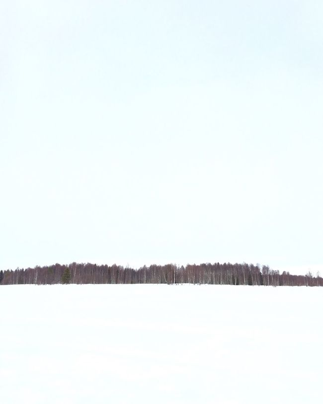 Landscapes With WhiteWall Lapland Trees Minimalism