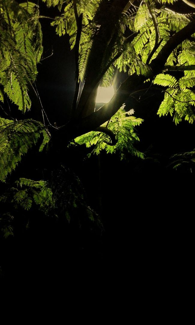Dark Tree Forest Tranquility Beauty In Nature Tree Forest Dark Scenics Branch Tranquil Scene Growth Beauty In Nature Nature WoodLand Tree Trunk Green Color Non-urban Scene Plant Wilderness Majestic Tourism Outdoors