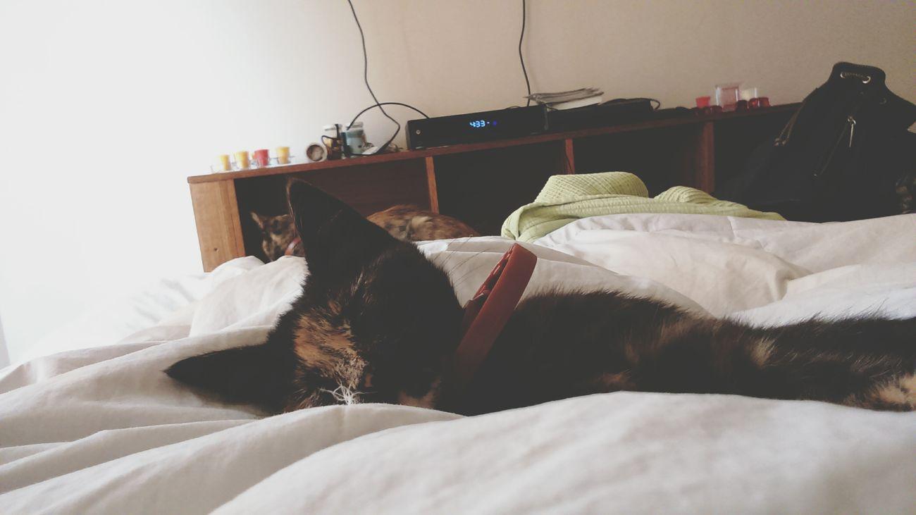 ? Cat♡