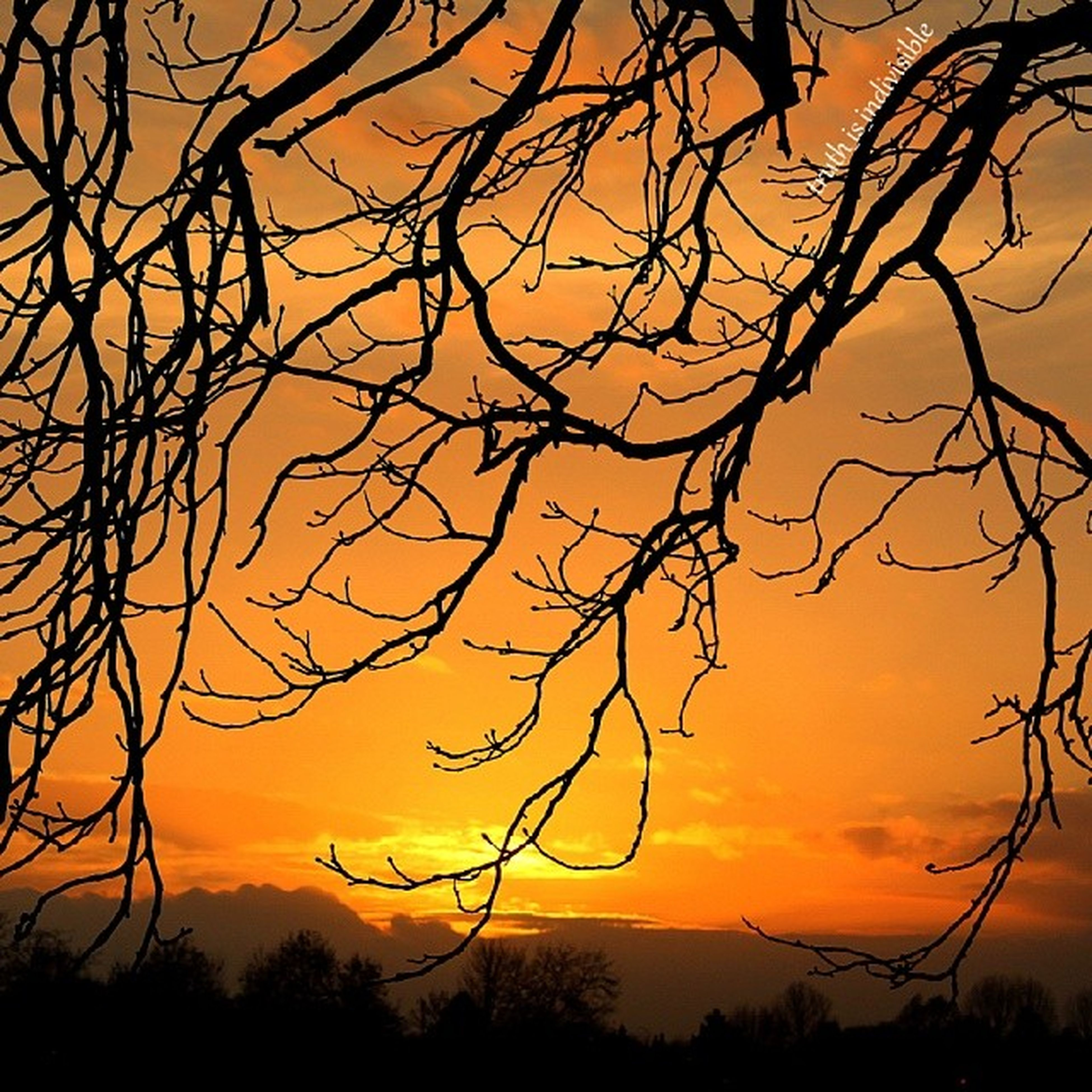 sunset, silhouette, bare tree, branch, orange color, tree, tranquility, scenics, beauty in nature, sky, tranquil scene, nature, idyllic, dramatic sky, low angle view, majestic, cloud - sky, outdoors, dusk, no people