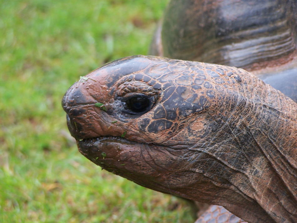 Animal Turtle Tortoise Close-up Day Nature Low Angle View Nature's Diversities Animal Themes Nature_perfection Nature Photography Freshness Beauty In Nature No People Animals Natures Diversities Shell Face Turtle Cuteness Tortoise! Giant Tortoise