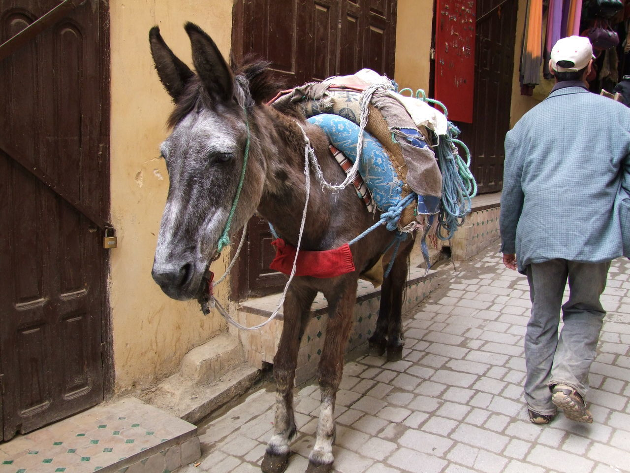 Working Donkey, Medina Animal Animal Themes Bridle City Composition Domestic Animal Donkey Famous Place Fes Full Frame Incidental Person Laden Medina Medina De Fez Morocco No People Old City One Animal Outdoor Photography Street Sunlight Tourist Attraction  Tourist Destination Working Animal Working Donkey