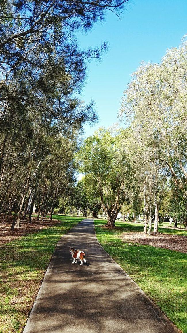 Hello World Taking Photos Walking The Dog Green Trees And Leaves Blue Sky Lovelovelove❤❤❤❤ Deception Bay Australia