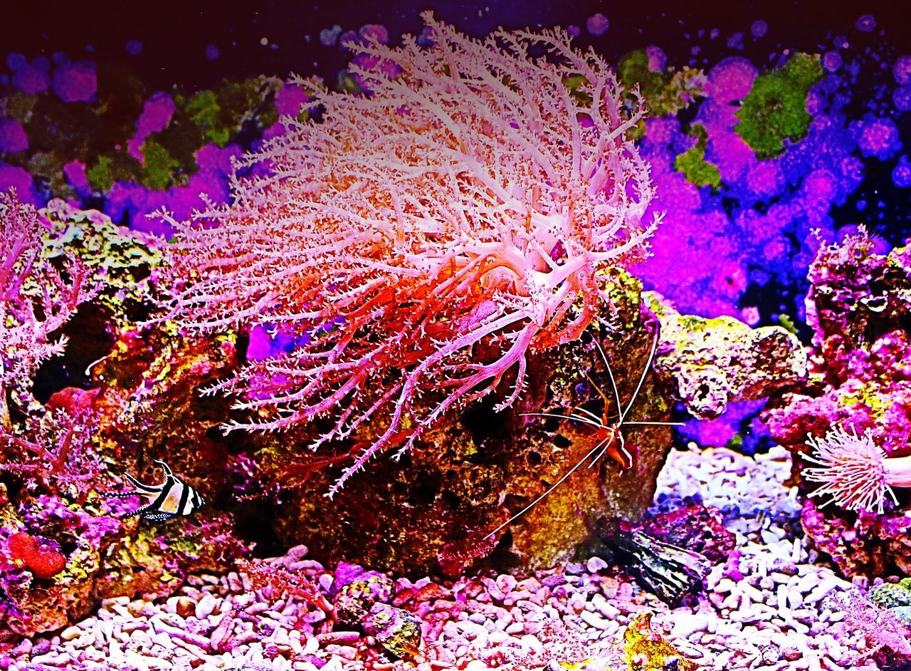Color Oregon Beauty Pacificnorthwest Colorful Blind Photographer Oregon Laceyalondra Oregonphotographer Portlandphotographer Pdxphotographer Ocean Colors Nature Pacific Ocean Pacific Oregoncoastaquarium Oregon Coast Sea Sealife Aquarium Aquarium Life Shrimps Underwater
