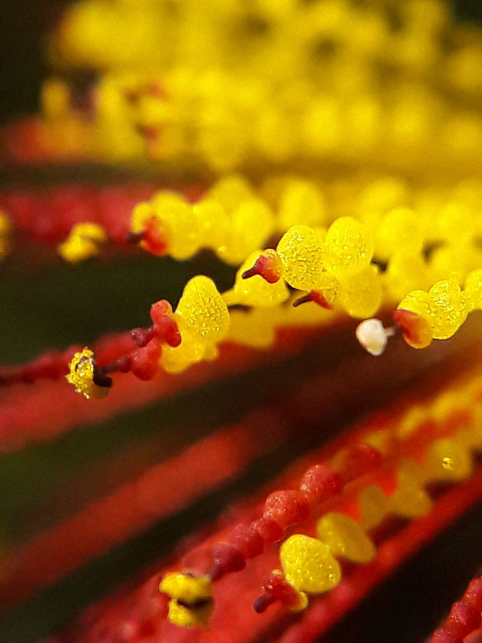 growth, plant, drop, close-up, flower, no people, fragility, freshness, nature, beauty in nature, water, day, outdoors, flower head